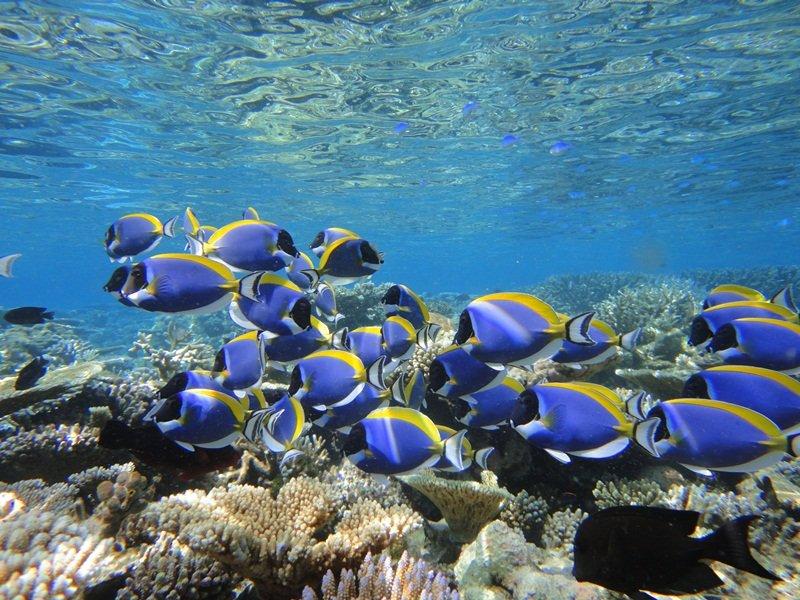 Backpackers Heron Island Australia